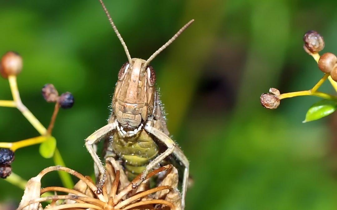The Grasshopper Syndrome: Self Doubt